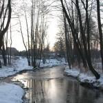Wieprz zimą