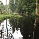Lesny zakątek