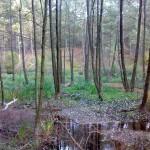 Leśny zakątek