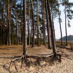 Plaża nad dziki stawem w Hutkach