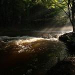 Szumy na Tanwii, drugiej słynnej roztoczańskiej rzece