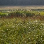 Łąka w Hutkach (znajdź bociana)