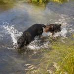 Przygotujcie swoje psy na spacer życia